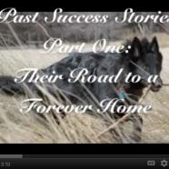 Rescue Success Stories Part 1
