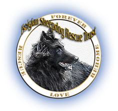 Belgian Sheepdog Rescue Trust