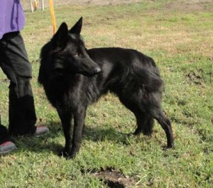 shelter dog 3